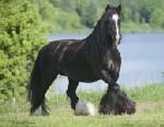 Horsecrazy200