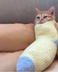 CatsFurLife