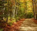 Autumn scene 9 1