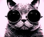 Cat with sunglasses 1600x1200 1206016