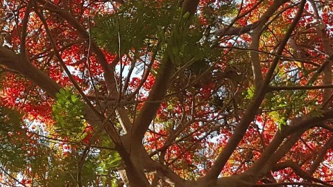 Red tree in my home - by Mohamed Zeyada