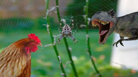 Chicken or spider - Eclectic - Garden - by Orionaute