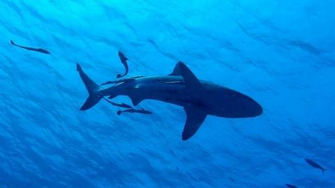 Baby shark do do do do do - by Crazy cat girl 10