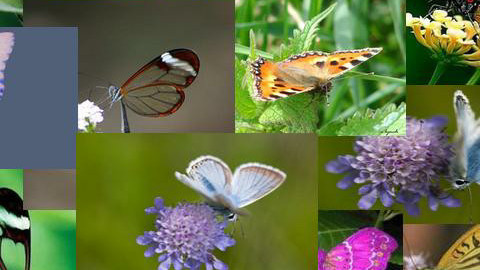 butterfly - Garden - by julietta