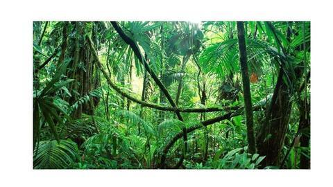 selva223 - by franco777789